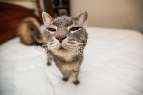 7038727-funny-cat
